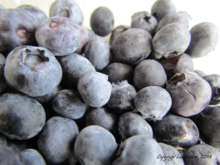 Blueberries Taken August 24, 2014 with Canon Powershoot SX30 IS