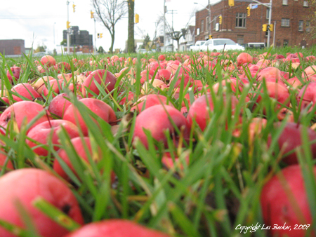 """Applefield Sky Original 'Apples'""Taken October 20, 2007 with Canon PowerShot A550"