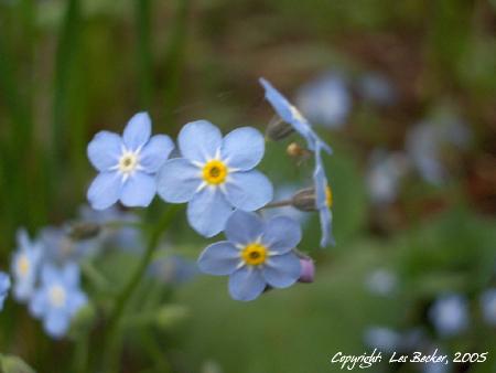 """""""Pretty Blue Blur"""""""