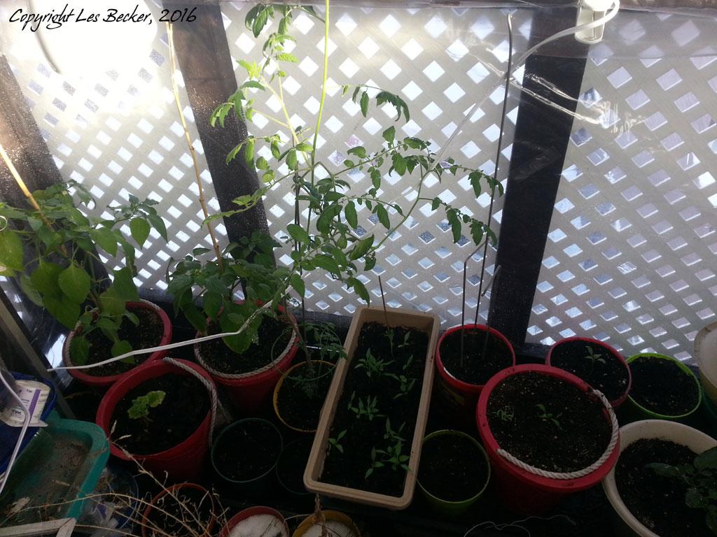Balcony Greenhouse - January 201